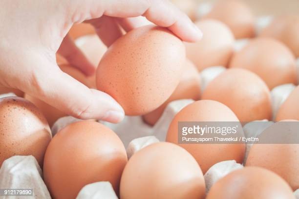 Cropped Image Of Hand Holding Egg