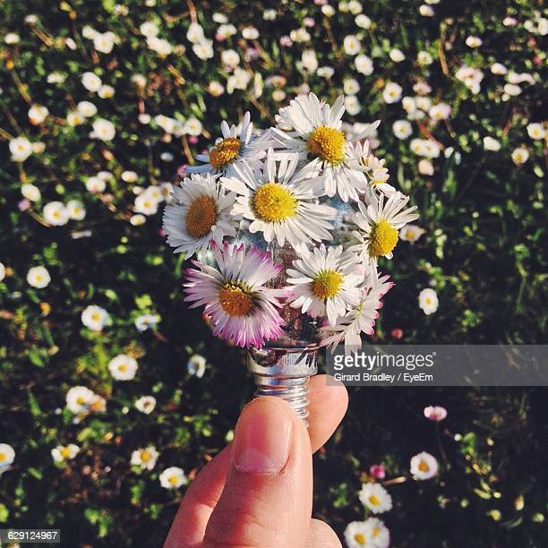 Cropped Image Of Hand Holding Electric Bulb With Flowers