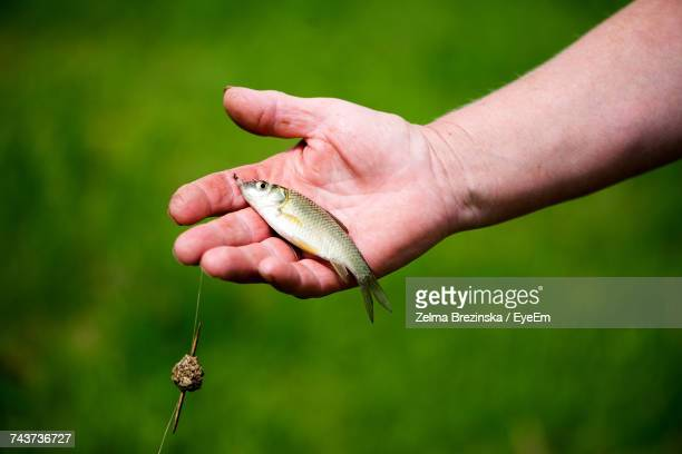 Cropped Image Of Hand Holding Fish With Fishing Hook