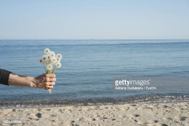 Cropped Image Of Hand Holding Flowers On Shore At Beach Against Clear Sky