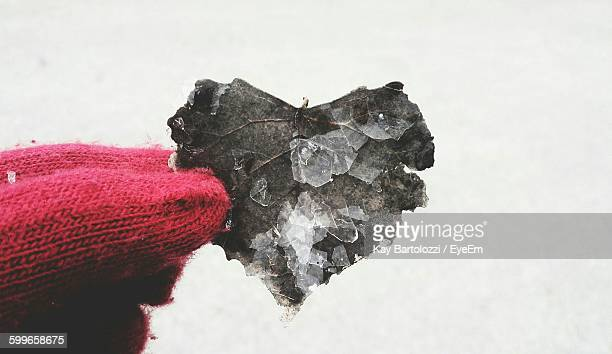 Cropped Image Of Hand Holding Frozen Leaf