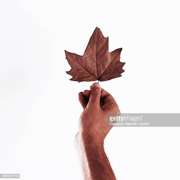 Cropped Image Of Hand Holding Maple Leaf Against White Background