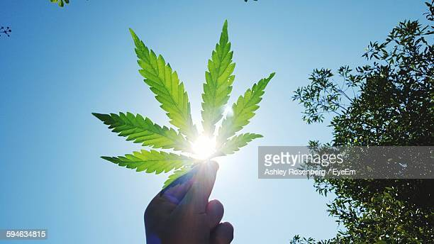 Cropped Image Of Hand Holding Marijuana Against Clear Sky