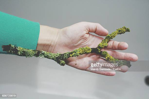 Cropped Image Of Hand Holding Moss Covered Stick