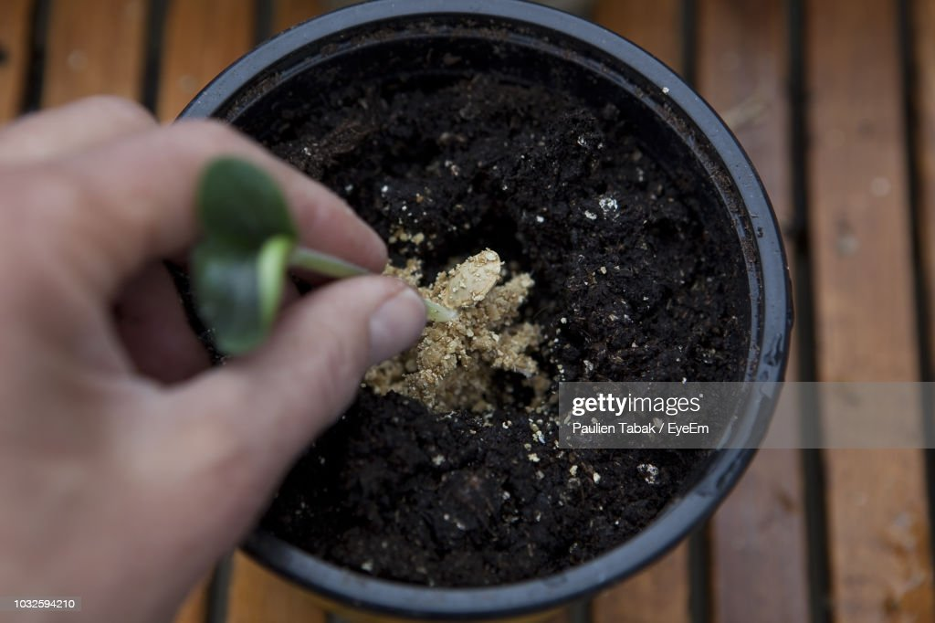 Cropped Image Of Hand Holding Plant : Stockfoto