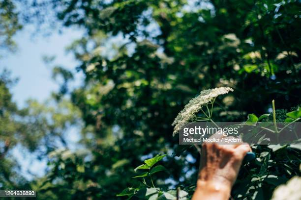 cropped image of hand holding plant - animals in the wild stock pictures, royalty-free photos & images