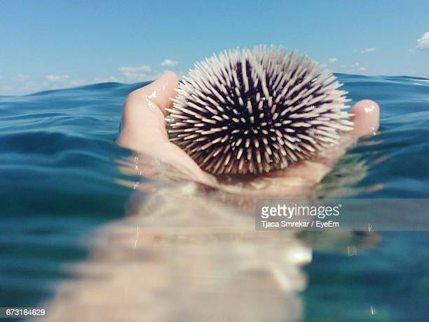 Cropped Image Of Hand Holding Sea Urchin In Water