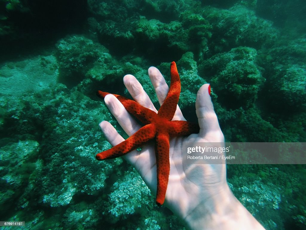 Cropped Image Of Hand Holding Starfish In Sea : Stock Photo