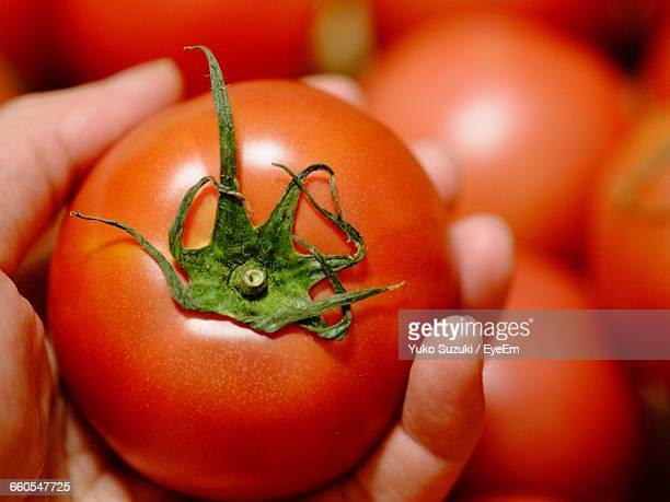 cropped image of hand holding tomato - ripe stock pictures, royalty-free photos & images