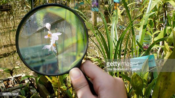 Cropped Image Of Hand Looking At Flower Through Magnifying Glass