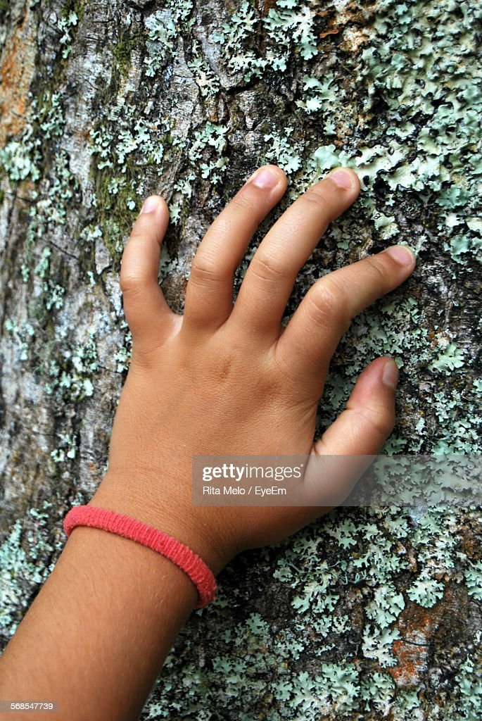 Cropped Image Of Hand On Tree Trunk : Stock Photo