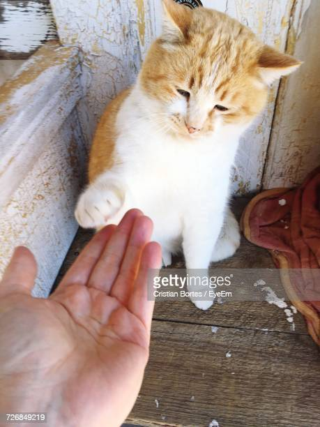 cropped image of hand reaching for kitten against wooden wall - bortes - fotografias e filmes do acervo