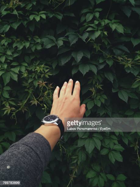 Cropped Image Of Hand Reaching Towards Plants
