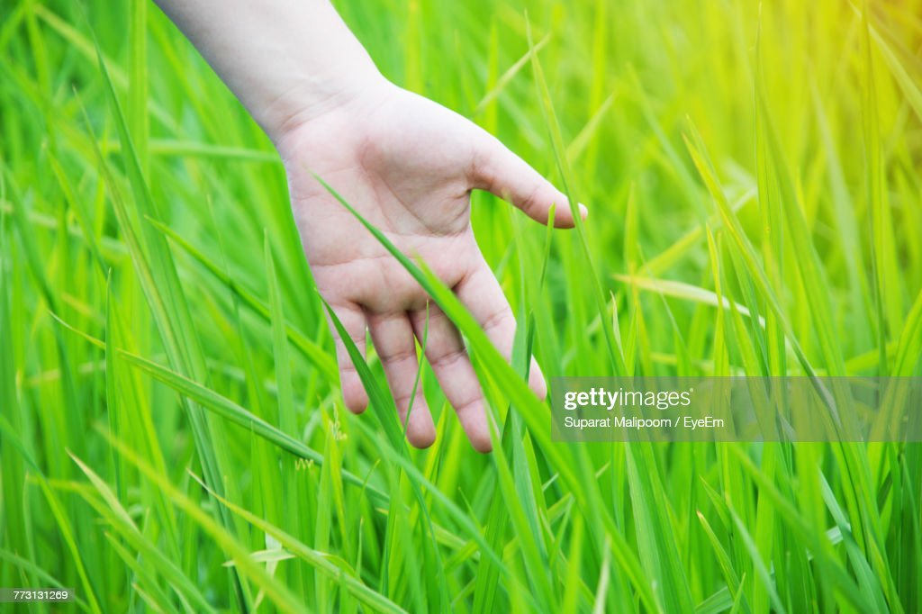 Cropped Image Of Hand Touching Grass : Photo