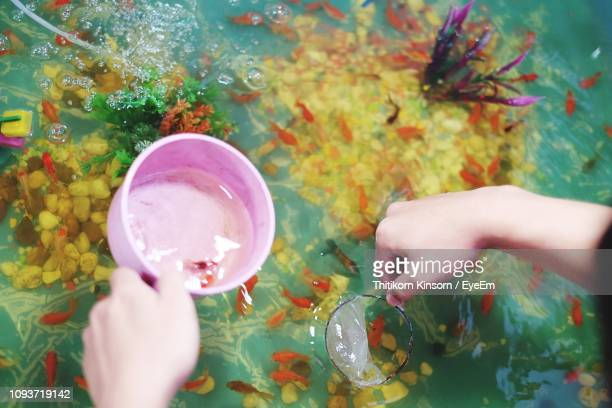 cropped image of hands cleaning fish tank - pet equipment stock pictures, royalty-free photos & images