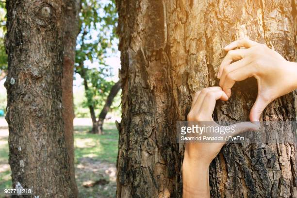 Cropped Image Of Hands Making Heart Shape On Tree