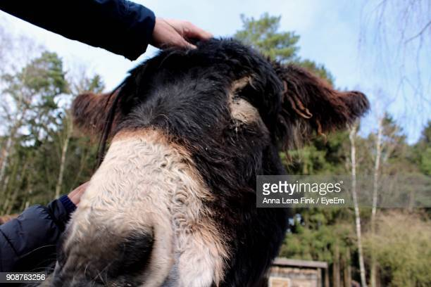 Cropped Image Of Hands Touching Donkey