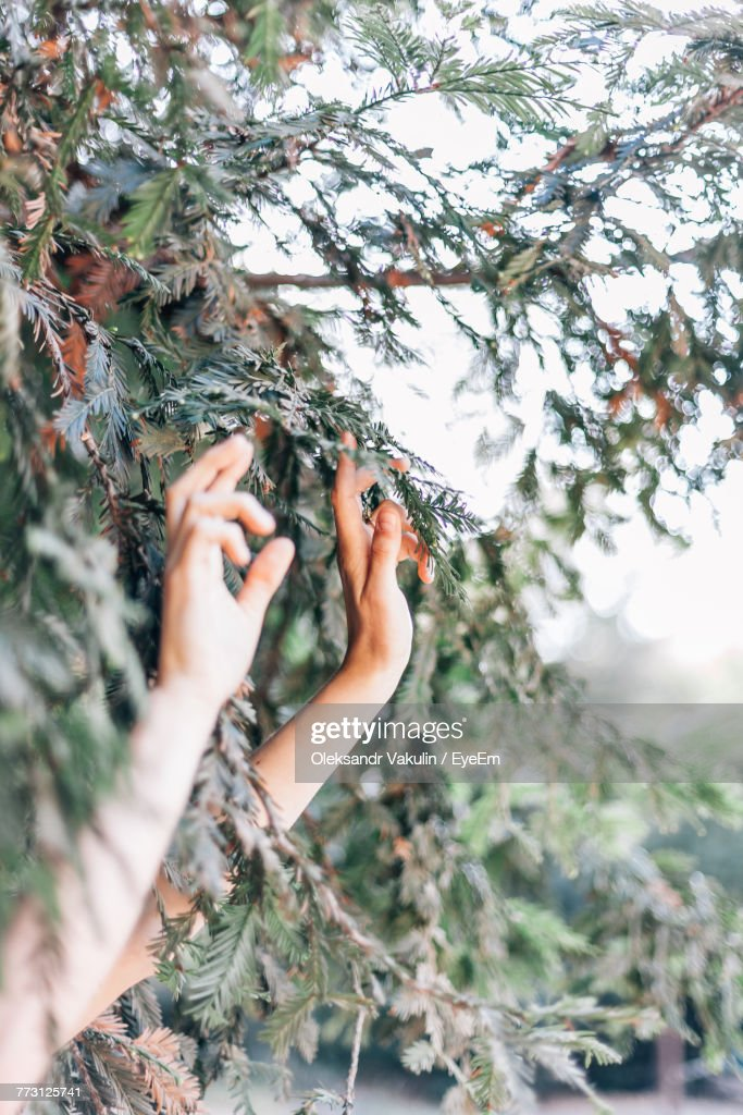 Cropped Image Of Hands Touching Leaves : Photo