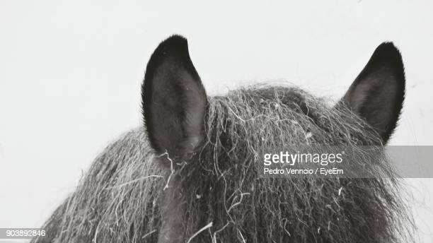 cropped image of horse ears against white background - animal ear stock photos and pictures