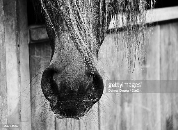 cropped image of horse nose - animal nose stock pictures, royalty-free photos & images