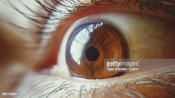 cropped image of human eye - extreme close up stock pictures, royalty-free photos & images