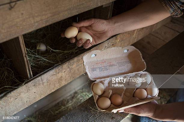 cropped image of man collecting egg at poultry farm - chicken coop stock pictures, royalty-free photos & images