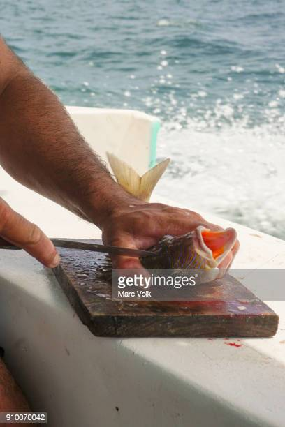 Cropped image of man cutting fish on boat