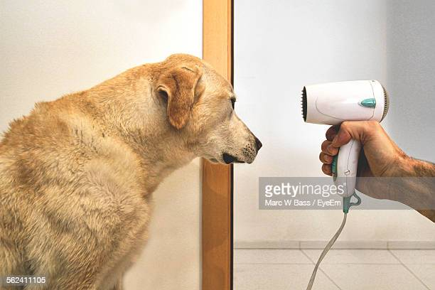 Cropped Image Of Man Drying Dog With Hair Dryer At Home