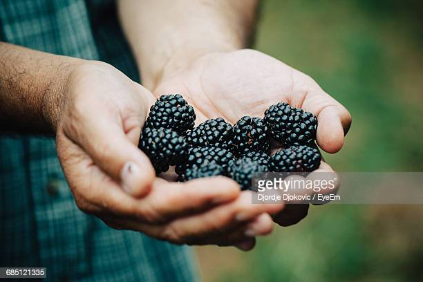 Cropped Image Of Man Holding Blackberries
