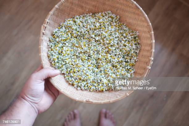 cropped image of man holding chamomiles in wicker bowl - chamomile tea stock photos and pictures