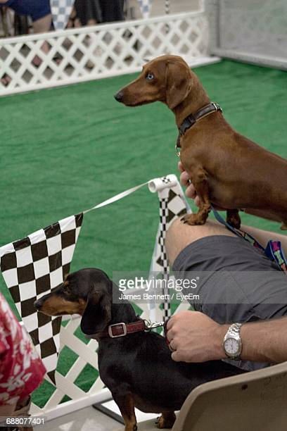 Cropped Image Of Man Holding Dachshunds At A Race