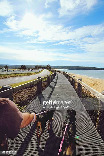 Cropped Image Of Man Holding Dogs While Walking On Footpath