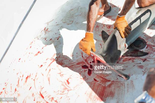 cropped image of man holding hammerhead shark on boat - animal blood stock pictures, royalty-free photos & images