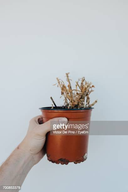 cropped image of man holding potted dry plant against white background - dead plant stock pictures, royalty-free photos & images