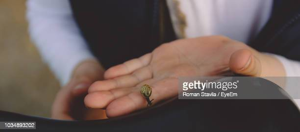 cropped image of man holding snail - hermaphrodite humans stock pictures, royalty-free photos & images