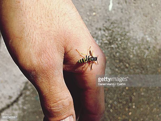 Cropped Image Of Man Holding Wasp