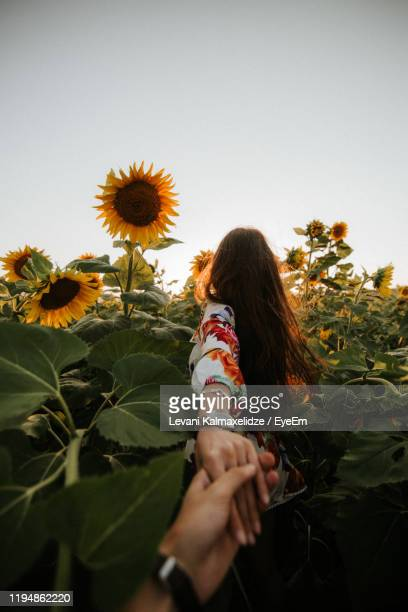 cropped image of man holding woman hands standing amidst sunflowers - unusual angle stock pictures, royalty-free photos & images