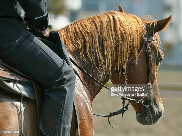 cropped image of man riding horse - hairy legs stock photos and pictures