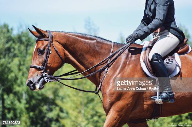 cropped image of man sitting on horse - equestrian event stock pictures, royalty-free photos & images
