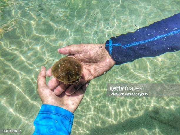 Cropped Image Of Man Touching Jellyfish In Sea