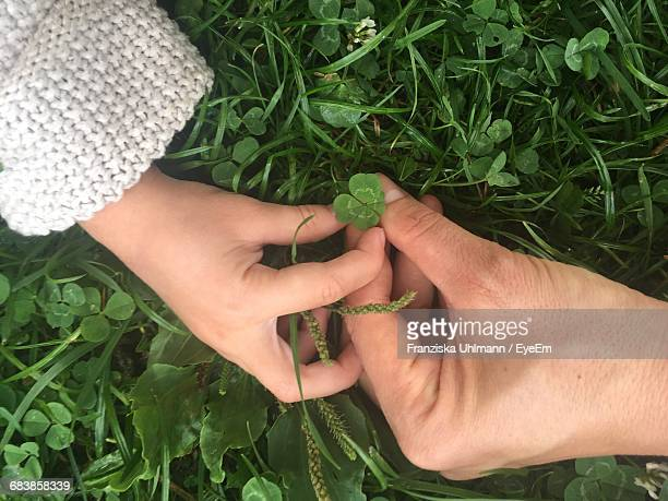 Cropped Image Of Mother And Child Holding Four Leaf Clover