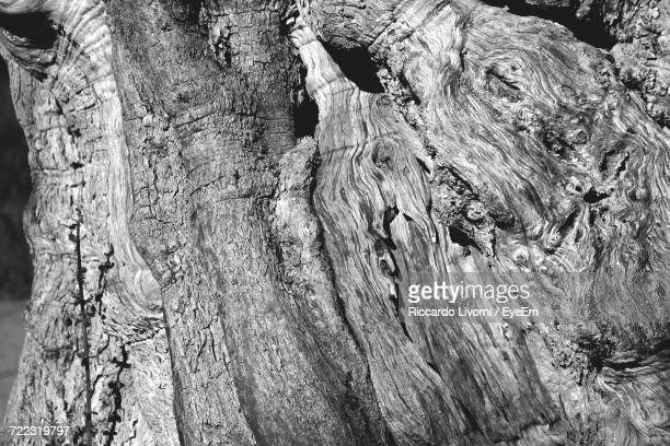 Cropped Image Of Olive Tree Trunk