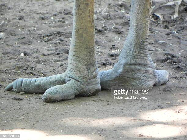 Cropped Image Of Ostrich Leg On Field