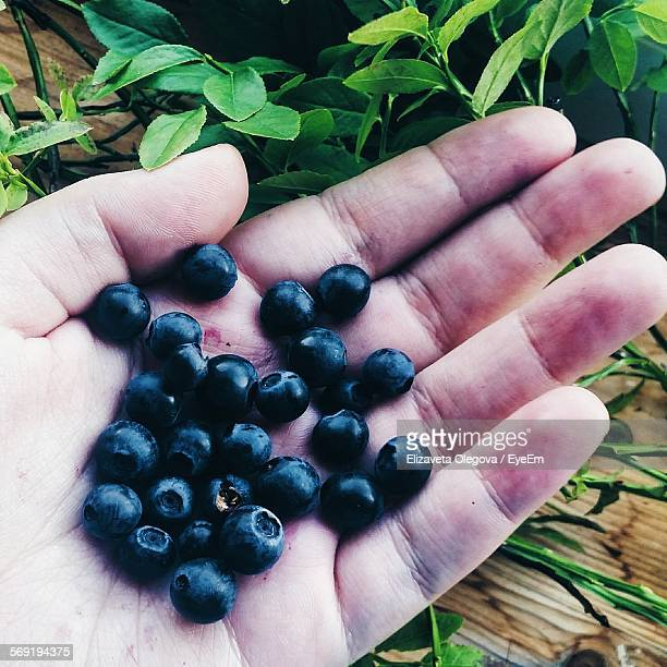 cropped image of palm holding fresh acai berries - acai stock pictures, royalty-free photos & images