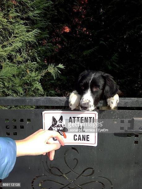 Cropped Image Of Person By Border Collie At Gate