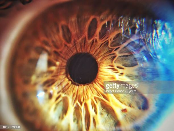cropped image of person eye - sensory perception stock pictures, royalty-free photos & images
