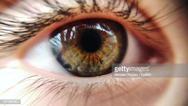 Cropped Image Of Person Eye