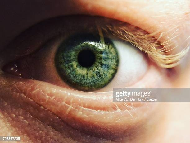 cropped image of person eye - green eyes stock pictures, royalty-free photos & images