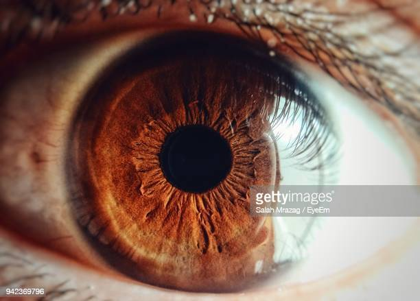 cropped image of person eye - close up stockfoto's en -beelden