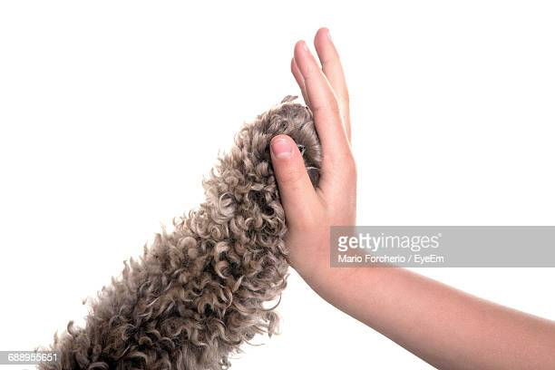 Cropped Image Of Person Giving High-Five To Cat Against White Background